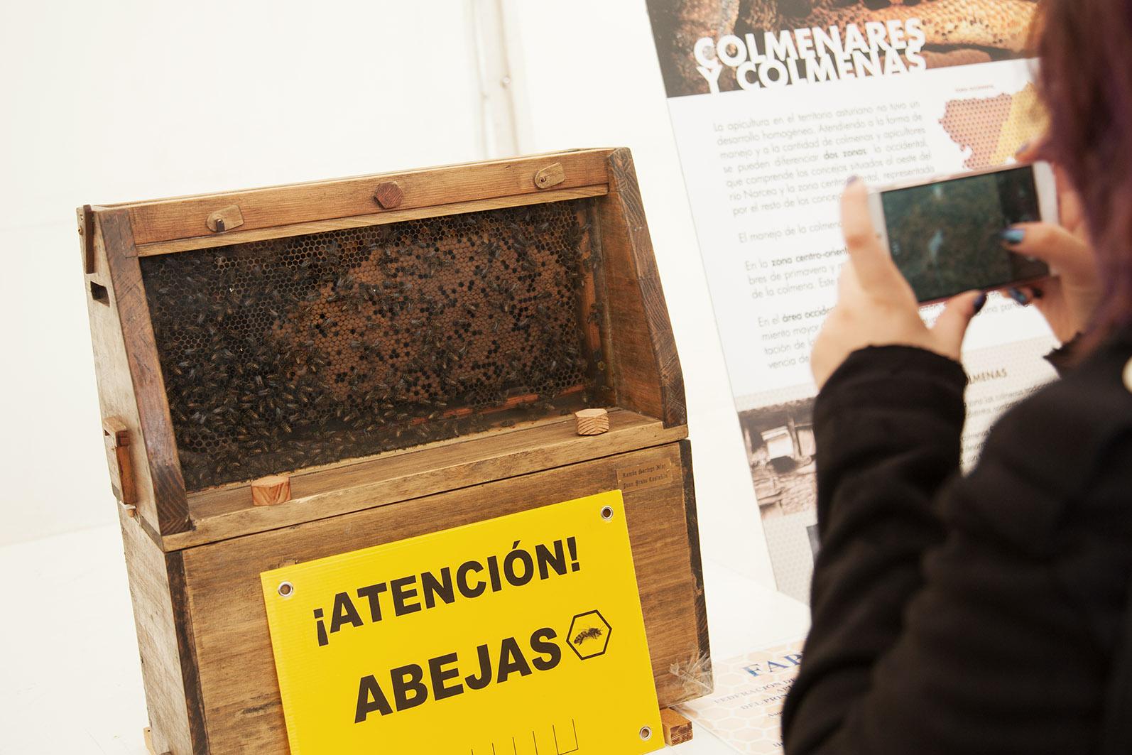 apicultura_5