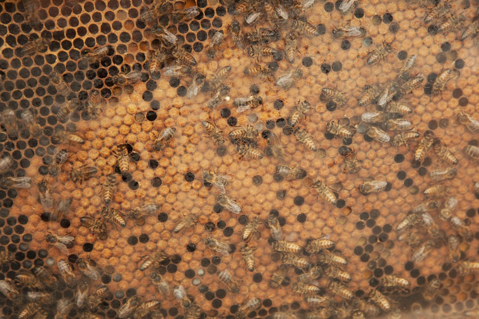 apicultura_7